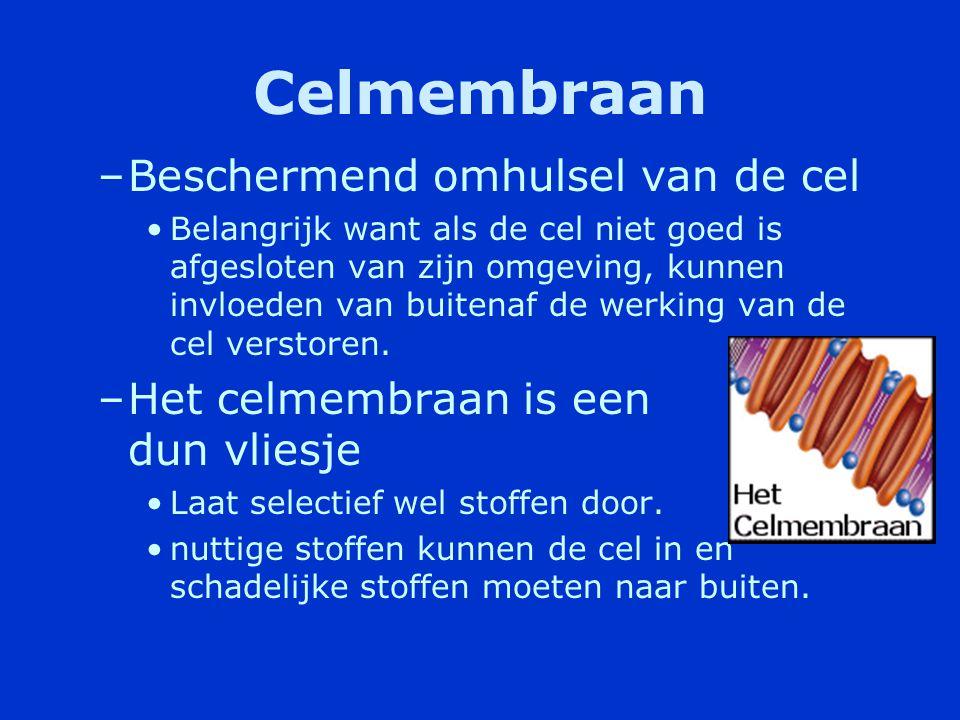 Celkern •Bolletje met een membraan dat uit twee lagen bestaat.