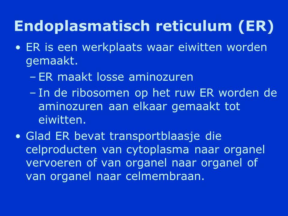 Endoplasmatisch reticulum (ER) •Netwerk van buizen en platte holtes dat bestaat uit een ruw en glad deel.