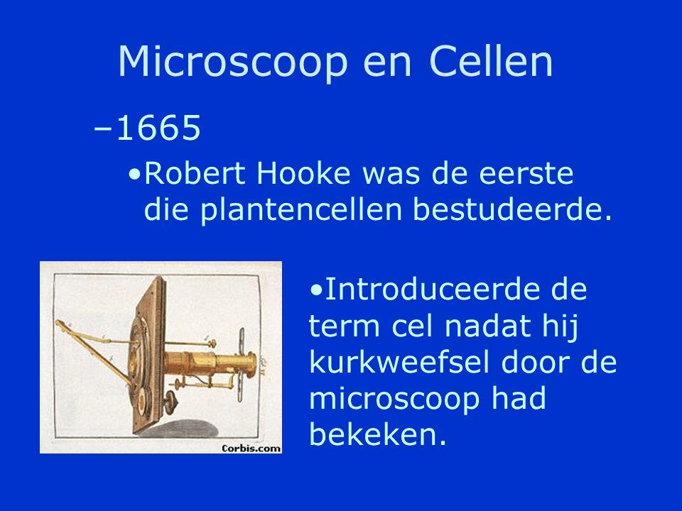Microscoop en Cellen •1600 –Anton van Leeuwenhoek was de eerste die levende cellen beschreef die hij had gezien door een microscoop