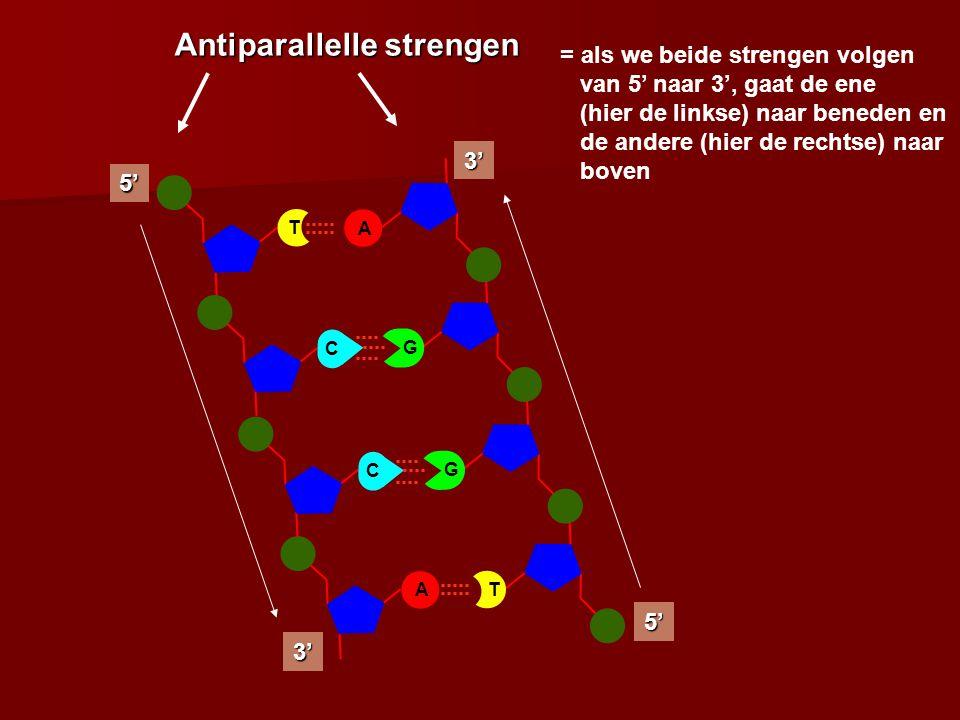 C A 5' 3' C T A G 3' 5' T G Antiparallelle strengen = als we beide strengen volgen van 5' naar 3', gaat de ene (hier de linkse) naar beneden en de andere (hier de rechtse) naar boven