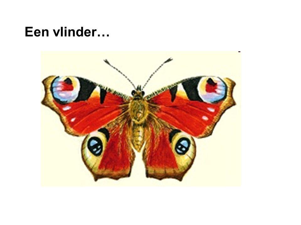 Een vlinder… dia