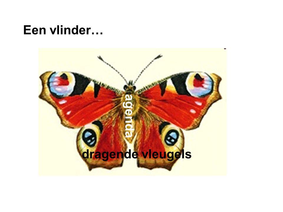 Een vlinder… dia agenda dragende vleugels