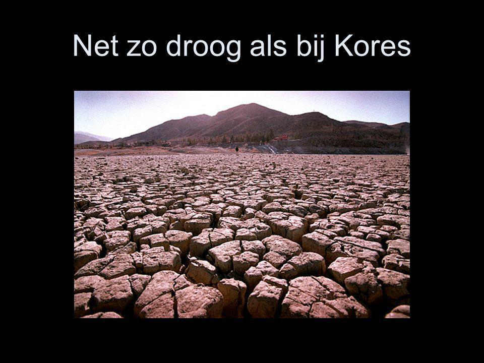 Net zo droog als bij Kores