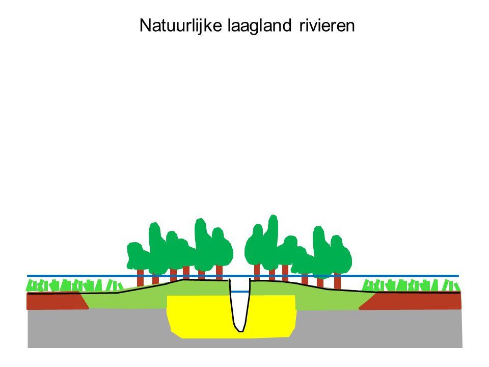 Ruimte voor de Rivier (doorsnede) verwijdering van obstakels dijk verlegging uiterwaard verlaging nevengeulkribverlaging