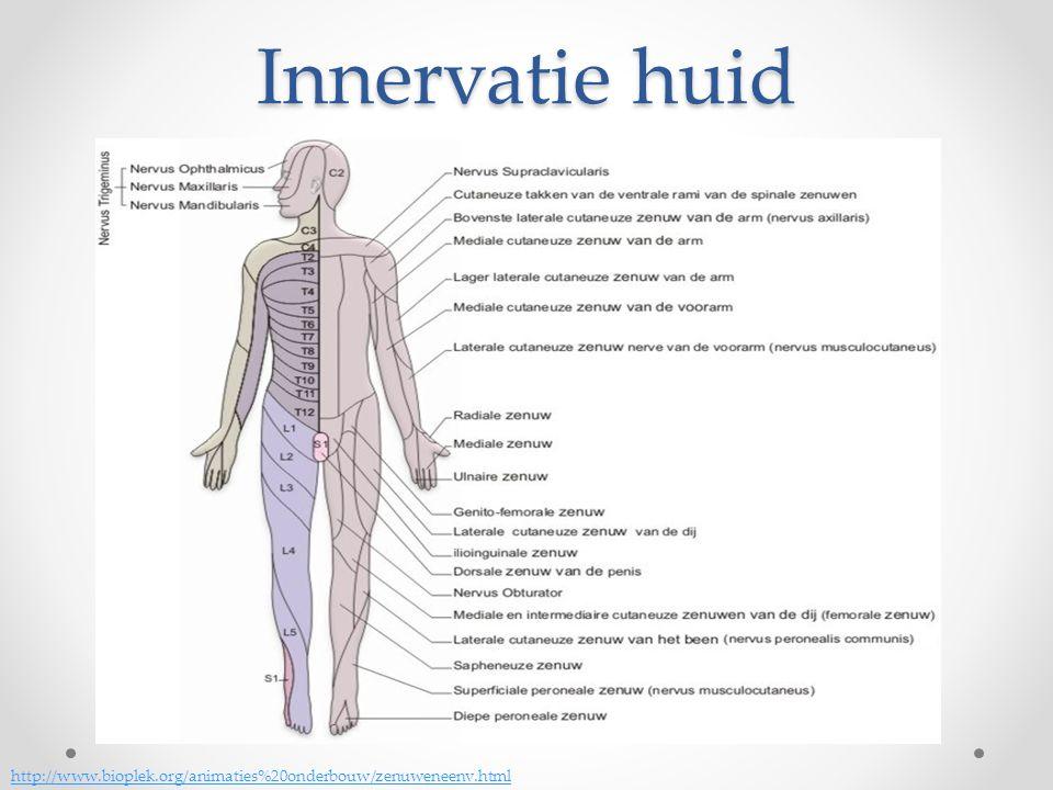 Innervatie huid http://www.bioplek.org/animaties%20onderbouw/zenuweneenv.html