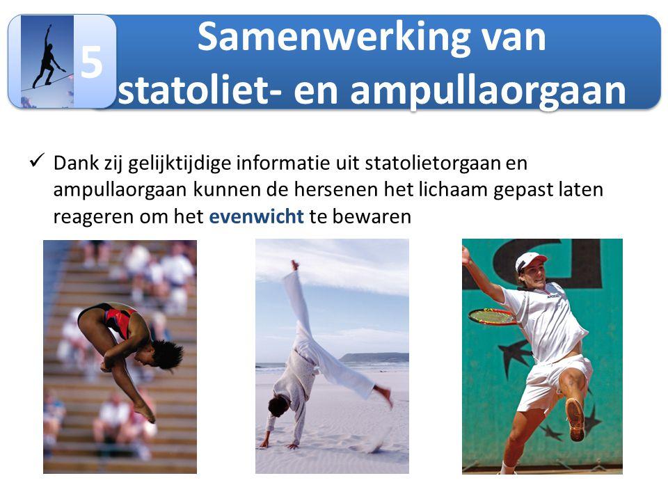 Samenwerking van statoliet- en ampullaorgaan 5 5  Dank zij gelijktijdige informatie uit statolietorgaan en ampullaorgaan kunnen de hersenen het licha