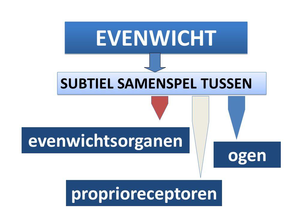 EVENWICHT SUBTIEL SAMENSPEL TUSSEN evenwichtsorganen proprioreceptoren ogen