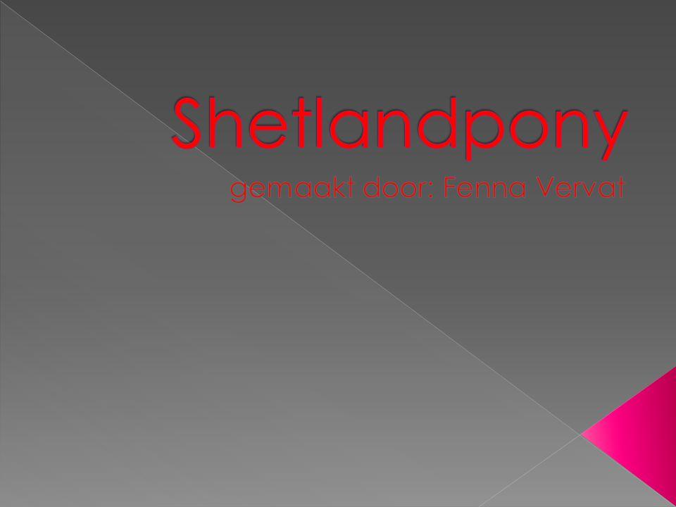  Waarom ik het hier over hou. Waar komen shetlandpony`s vandaan.