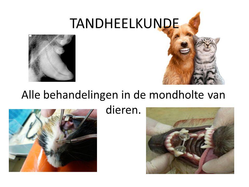 TANDHEELKUNDE Alle behandelingen in de mondholte van dieren.