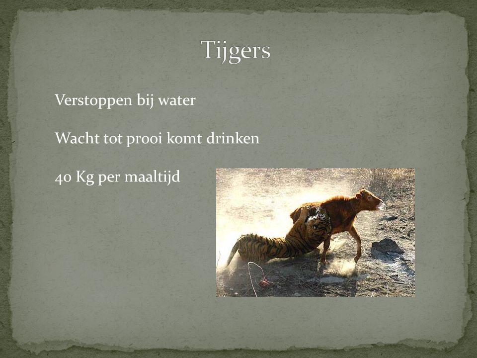 Jagen in groepen Omsingelen prooi Rennen naar prooi