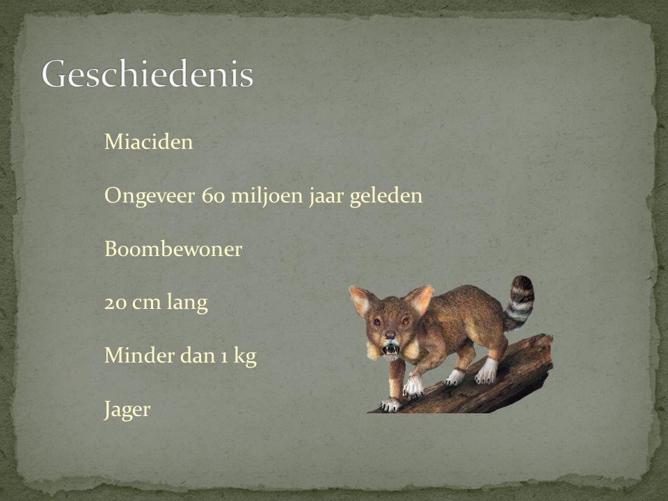  Geschiedenis  Soorten  Kenmerken  Jagen  Leeuwen  Tijgers  Panters  Jaguars  Cheeta's
