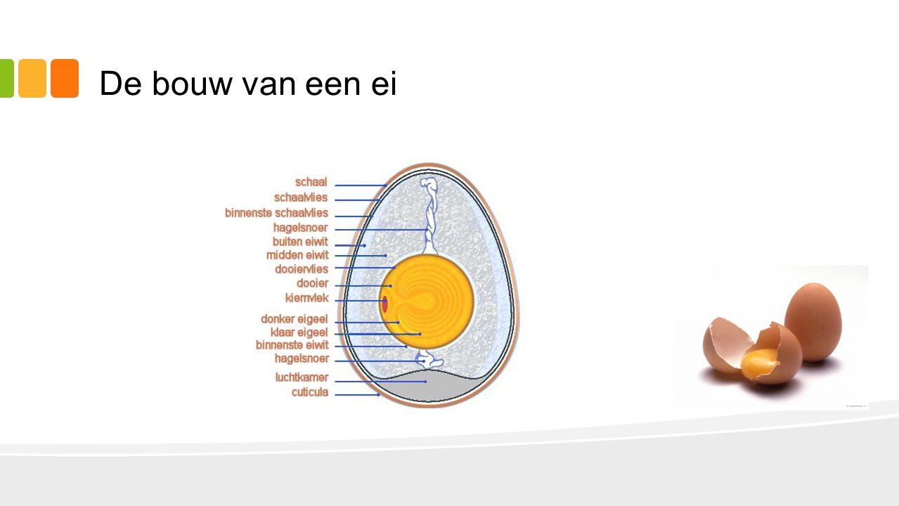 De bouw van een ei