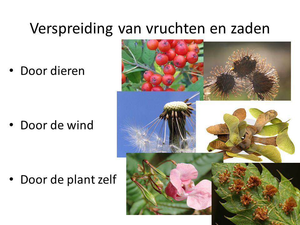 Verspreiding van vruchten en zaden • Door dieren • Door de wind • Door de plant zelf