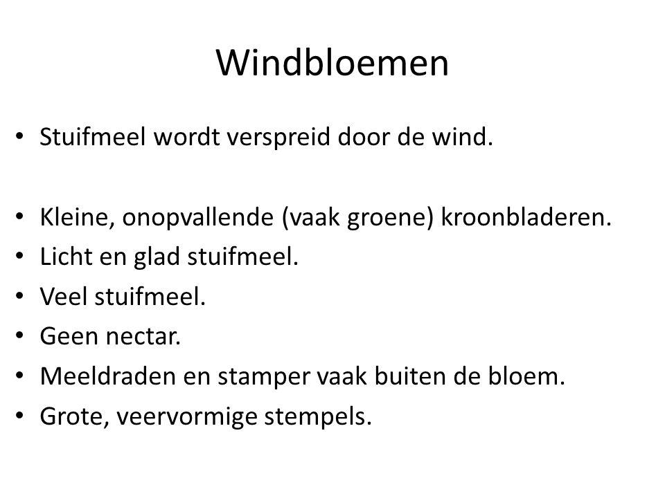 Windbloemen • Stuifmeel wordt verspreid door de wind. • Kleine, onopvallende (vaak groene) kroonbladeren. • Licht en glad stuifmeel. • Veel stuifmeel.
