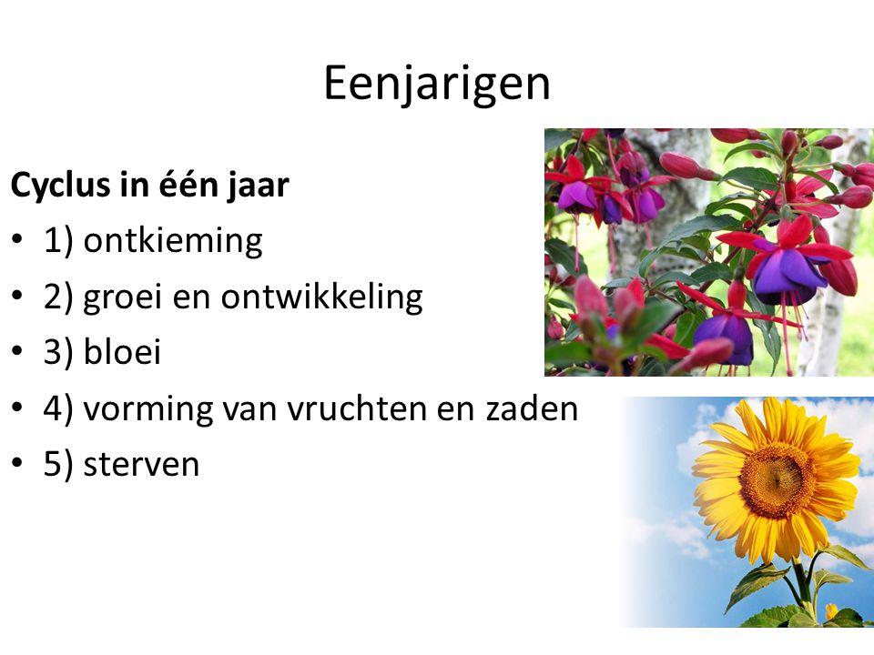 Eenjarigen Cyclus in één jaar • 1) ontkieming • 2) groei en ontwikkeling • 3) bloei • 4) vorming van vruchten en zaden • 5) sterven