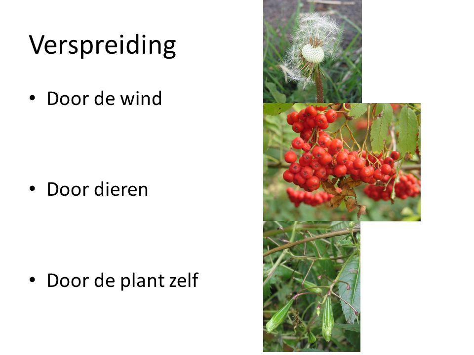 Verspreiding • Door de wind • Door dieren • Door de plant zelf
