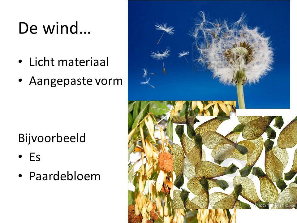 De wind… • Licht materiaal • Aangepaste vorm Bijvoorbeeld • Es • Paardebloem