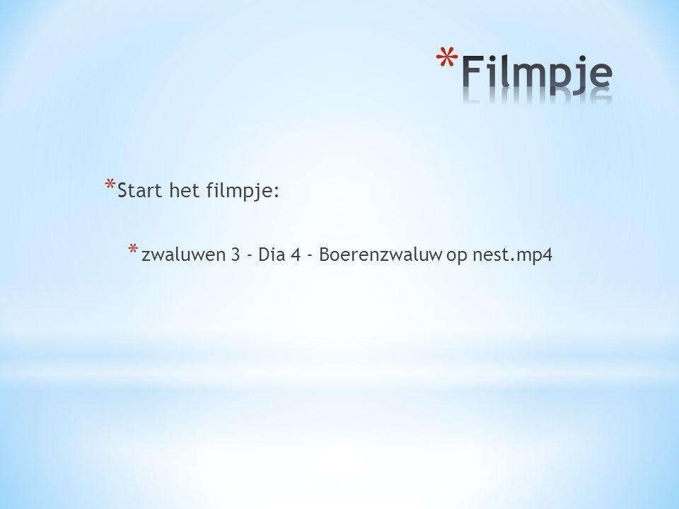 * Start het filmpje: * zwaluwen 3 - Dia 4 - Boerenzwaluw op nest.mp4