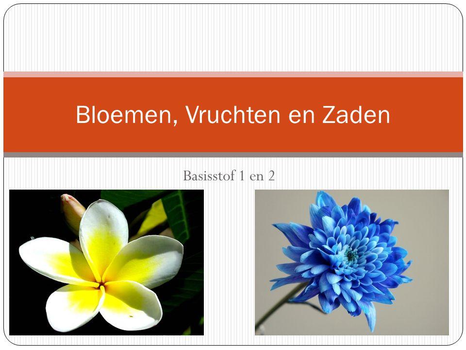 Basisstof 1 en 2 Bloemen, Vruchten en Zaden