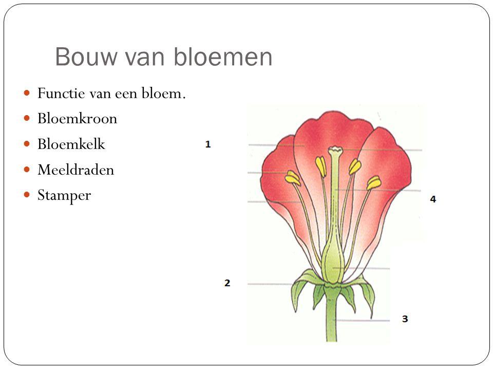 Bouw van bloemen  Functie van een bloem.  Bloemkroon  Bloemkelk  Meeldraden  Stamper