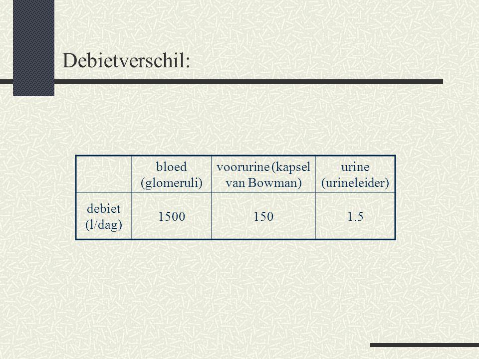 Debietverschil: bloed (glomeruli) voorurine (kapsel van Bowman) urine (urineleider) debiet (l/dag) 15001501.5