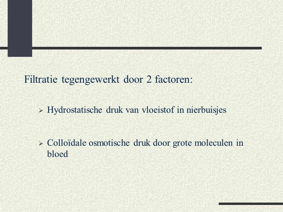 Filtratie tegengewerkt door 2 factoren:  Hydrostatische druk van vloeistof in nierbuisjes  Colloïdale osmotische druk door grote moleculen in bloed