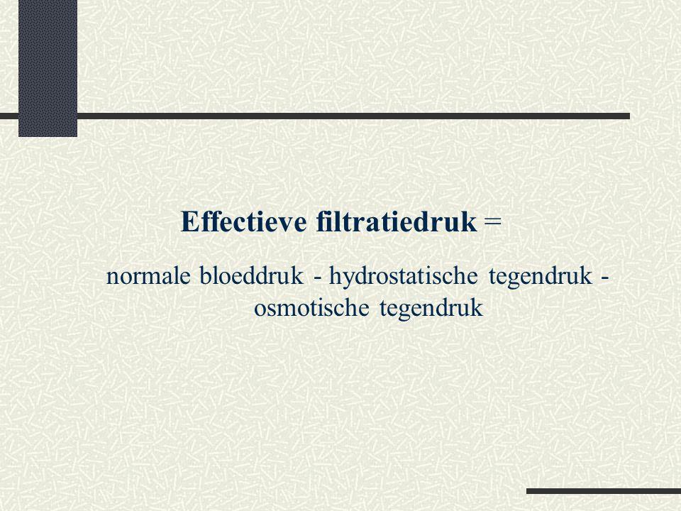 Effectieve filtratiedruk = normale bloeddruk - hydrostatische tegendruk - osmotische tegendruk
