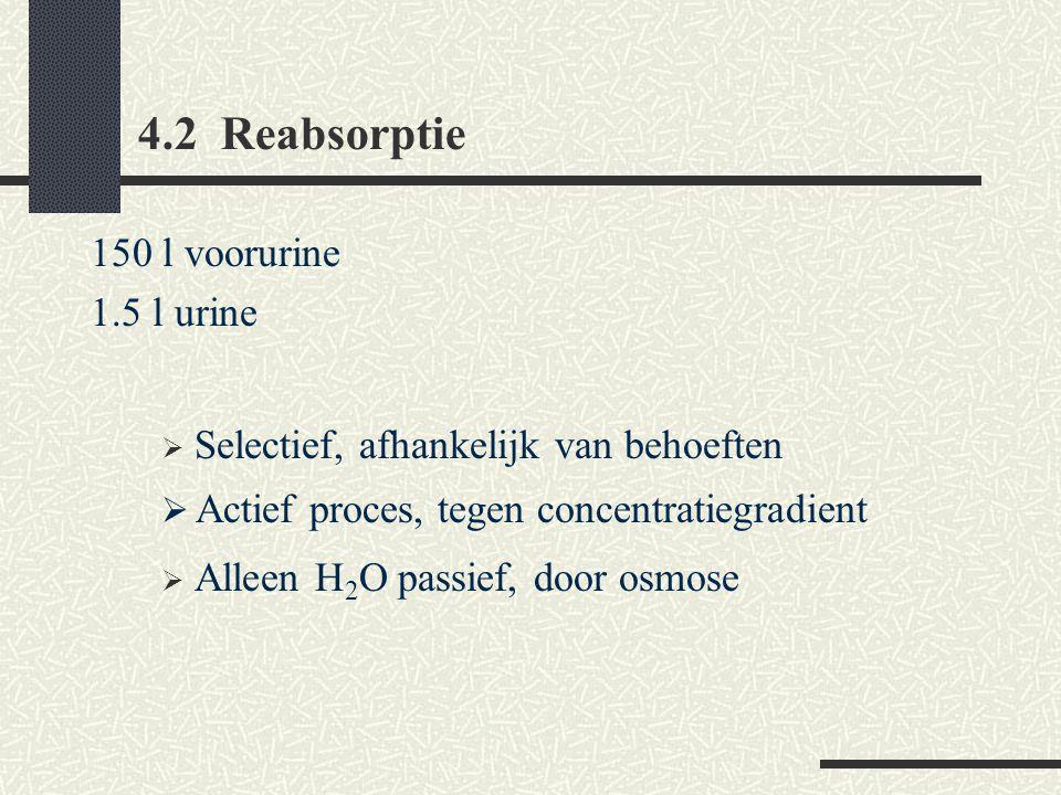 4.2 Reabsorptie 150 l voorurine 1.5 l urine  Selectief, afhankelijk van behoeften  Actief proces, tegen concentratiegradient  Alleen H 2 O passief, door osmose
