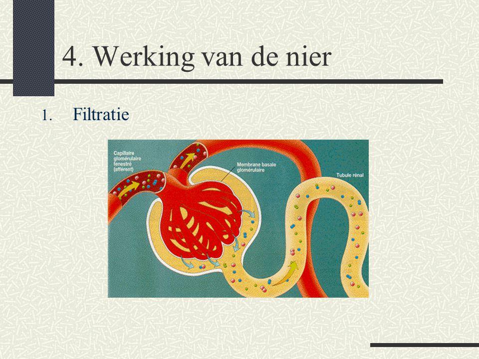 4. Werking van de nier 1. Filtratie 2. Reabsorptie