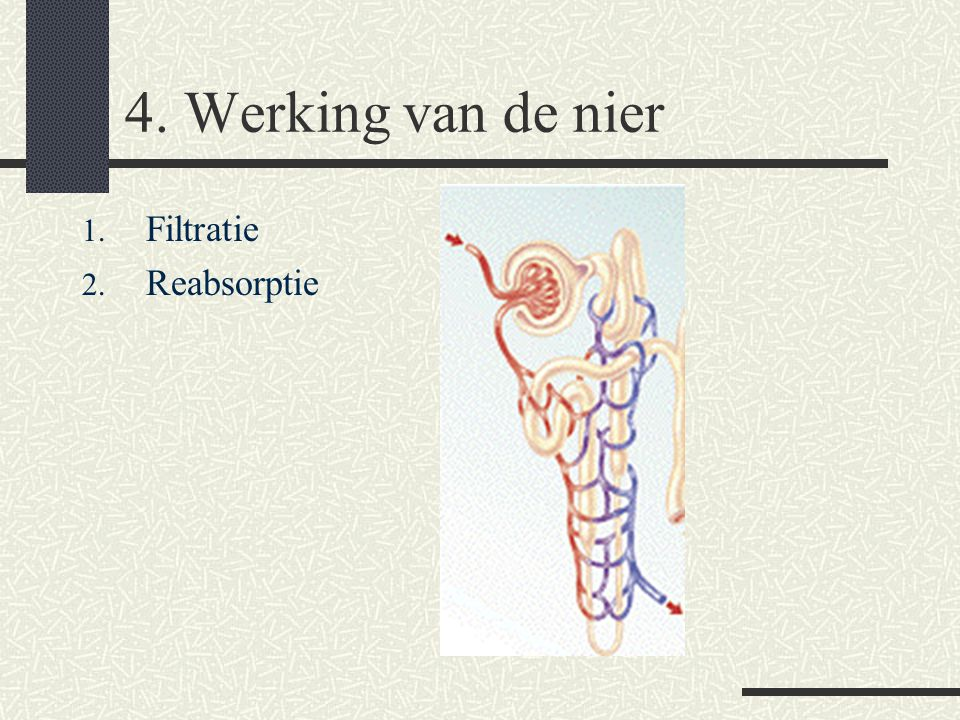 4. Werking van de nier 1. Filtratie 2. Reabsorptie 3. Excretie