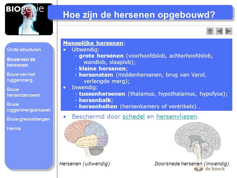 Verlengde merg Brug van Varol Middenhersenen Hypofyse Hypothalamus Thalamus Vaatweefsel Zijaanzicht hersenen (inwendig) Kleine hersenen Hersenbalk Hersenholten