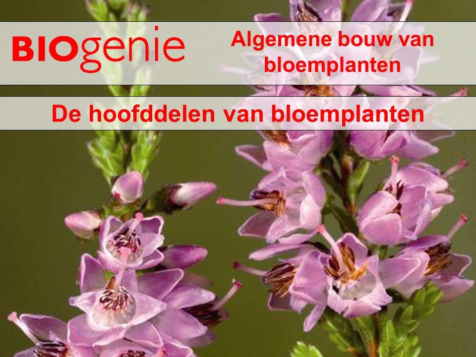 Algemene bouw van bloemplanten De hoofddelen van bloemplanten