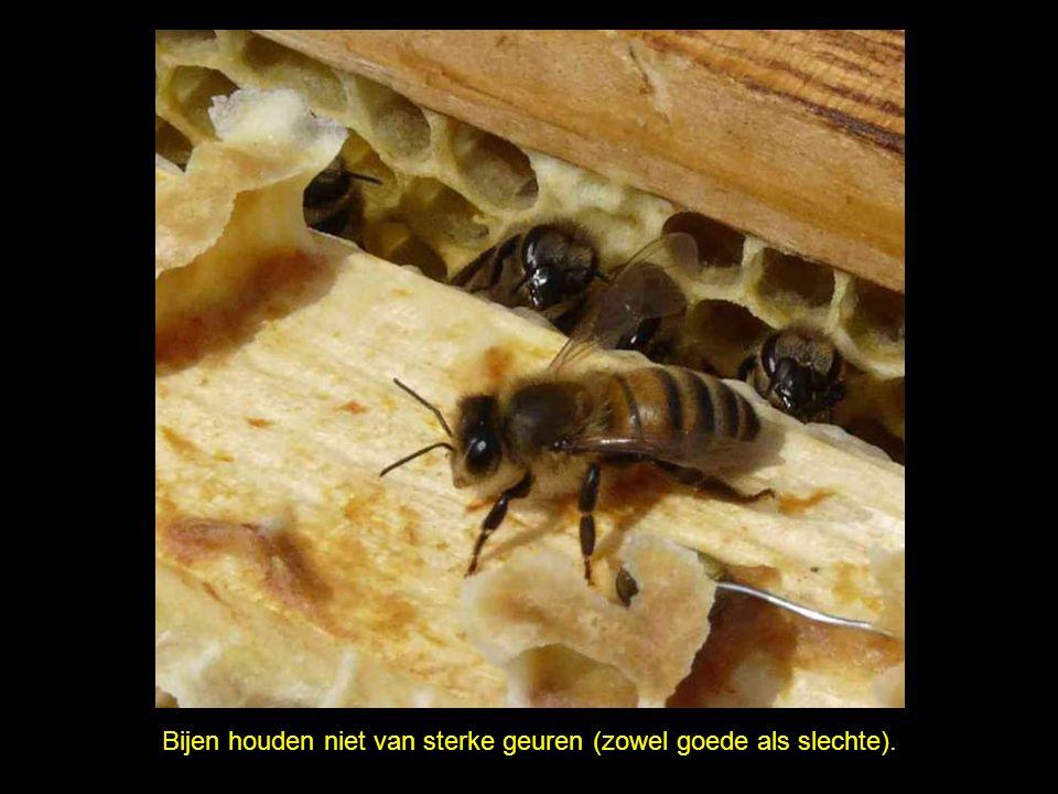 Bijen steken soms mensen die wild gebaren of praten. Zonder de bijen is er geen goede oogst.