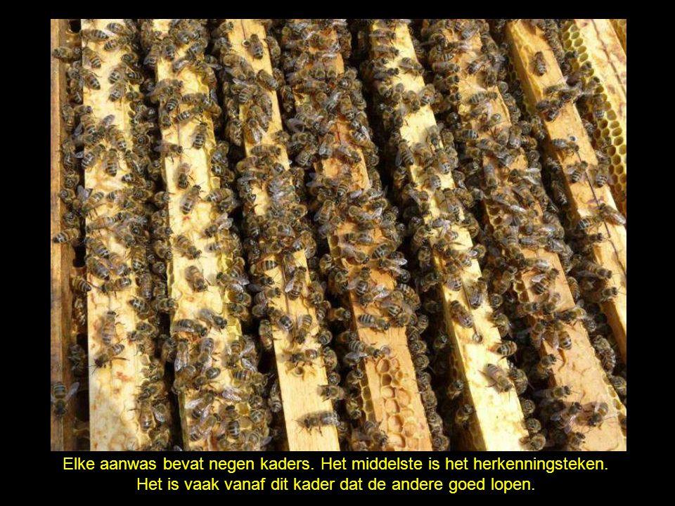Gewafelde wasplaten, met draden op hun plaats gehouden, dienen als steun voor de bouw van honingcellen.