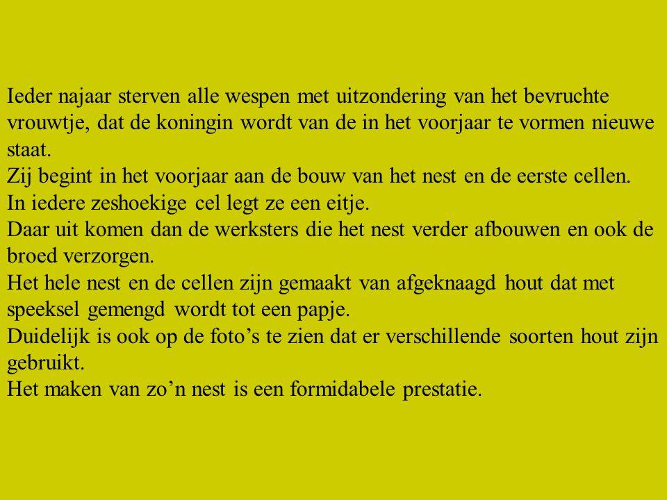 EINDE www.leurmans.dds.nl
