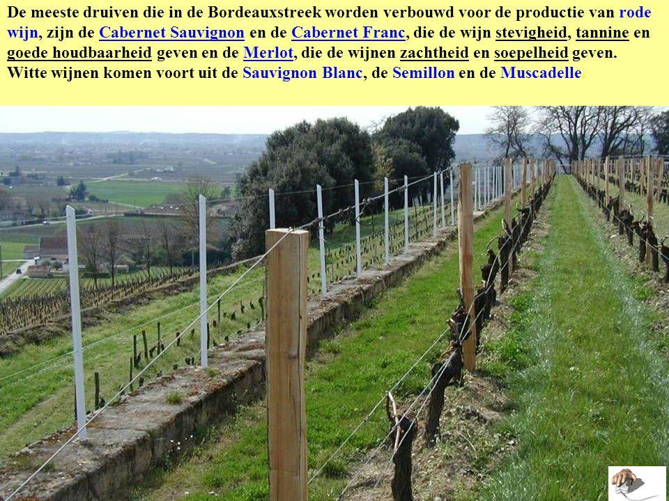 De meeste druiven die in de Bordeauxstreek worden verbouwd voor de productie van rode wijn, zijn de Cabernet Sauvignon en de Cabernet Franc, die de wijn stevigheid, tannine en goede houdbaarheid geven en de Merlot, die de wijnen zachtheid en soepelheid geven.