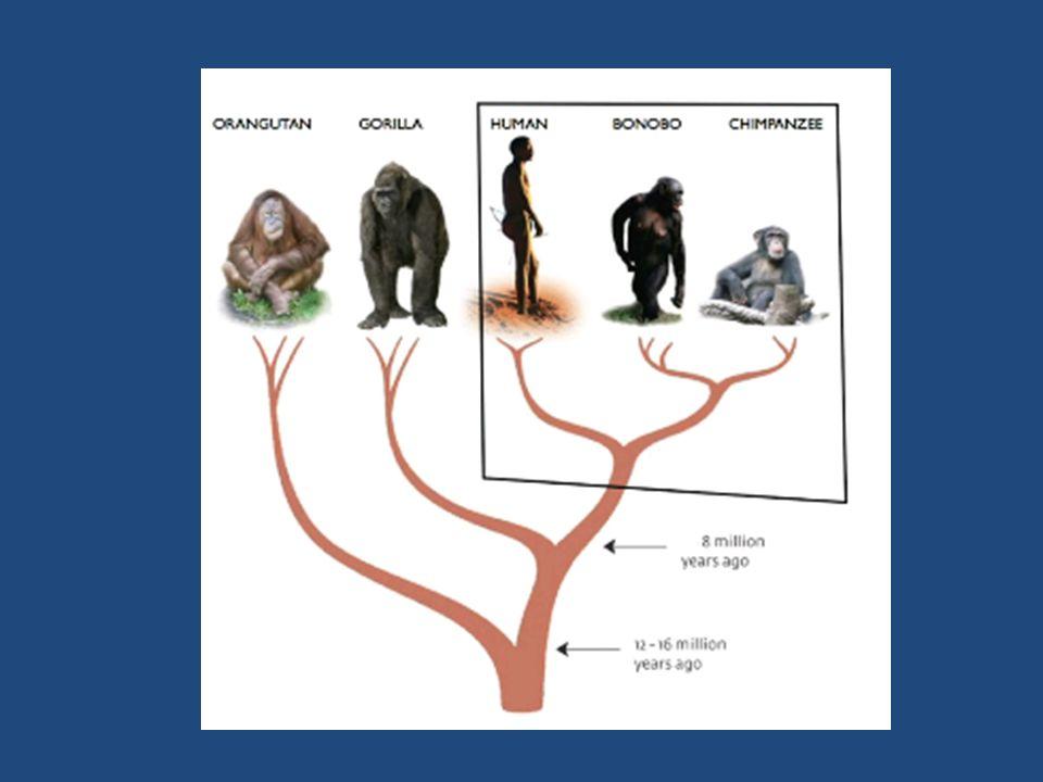 • Riftvallei: rand oerwoud-savanne, vulkanisch, meren/rivieren ~ ontstaan van genus homo Tijdsperspectief: de 'diepe tijd' & het eerste leven-> mens
