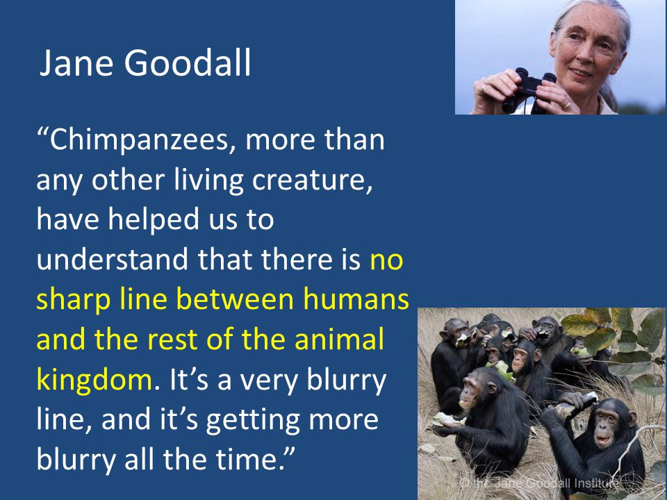 Jane Goodall Chimpanzees, more than any other living creature, have helped us to understand that there is no sharp line between humans and the rest of the animal kingdom.