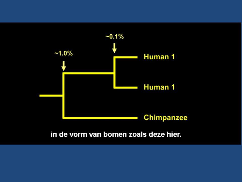 99% sociaal & egalitair Tijdsperspectief: de 'diepe tijd' & het eerste leven-> mens