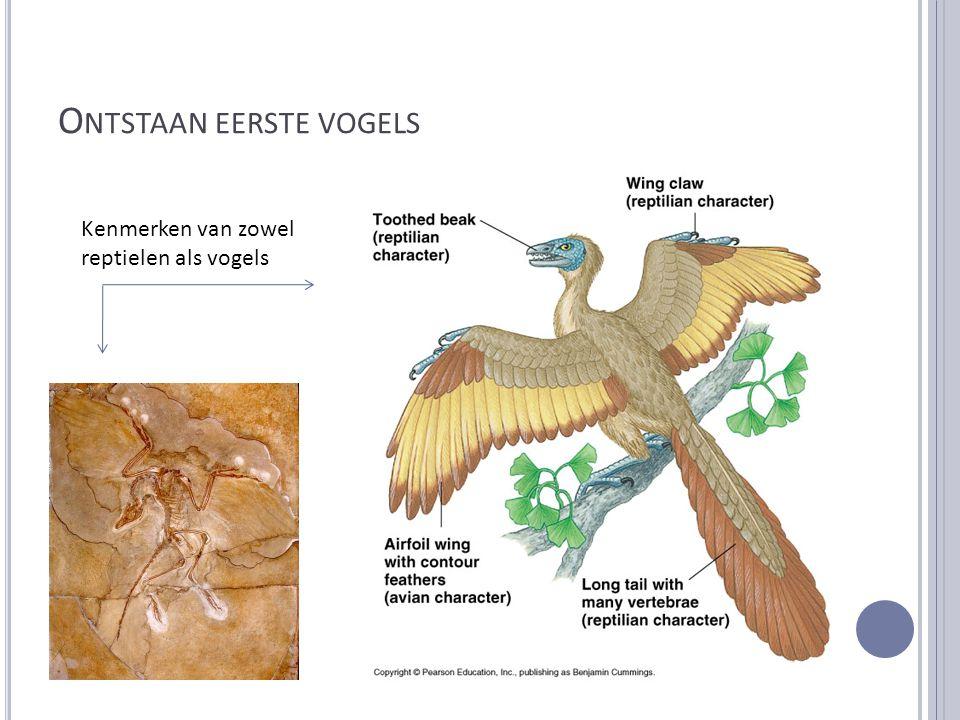 O NTSTAAN EERSTE VOGELS Kenmerken van zowel reptielen als vogels