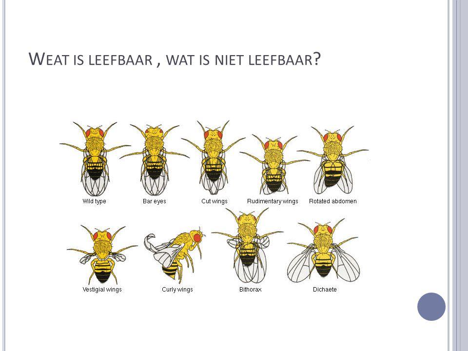 W EAT IS LEEFBAAR, WAT IS NIET LEEFBAAR ?