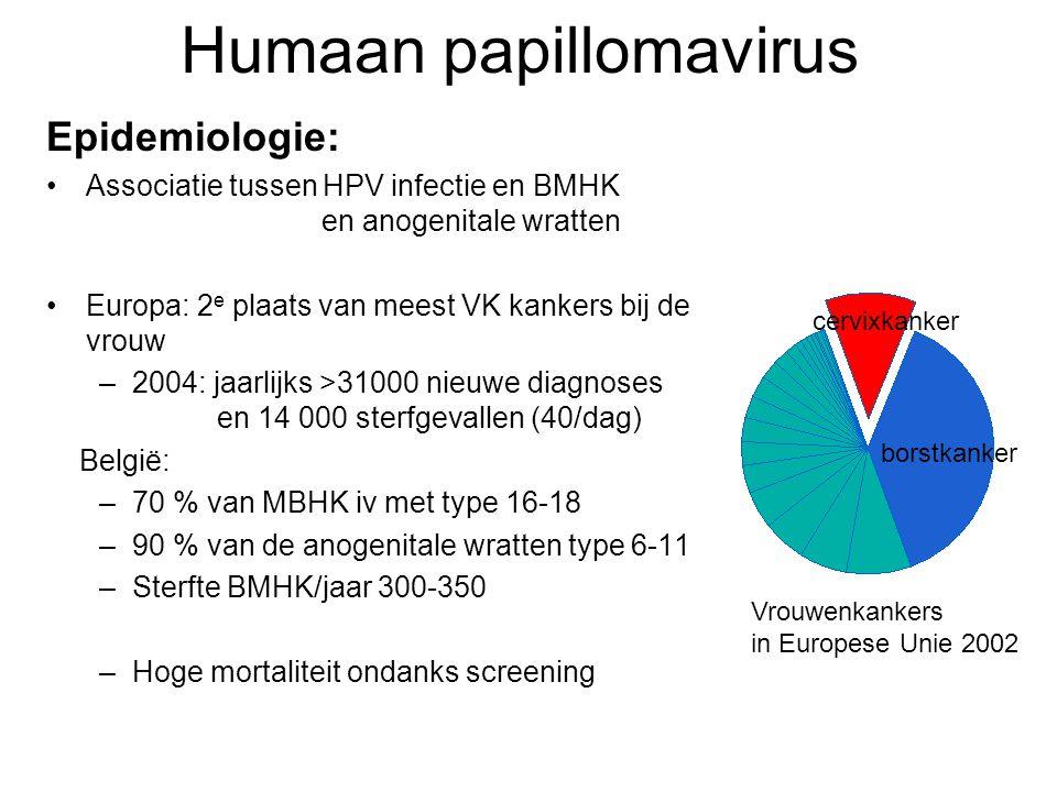 Humaan papillomavirus Epidemiologie: •Associatie tussen HPV infectie en BMHK en anogenitale wratten •Europa: 2 e plaats van meest VK kankers bij de vr