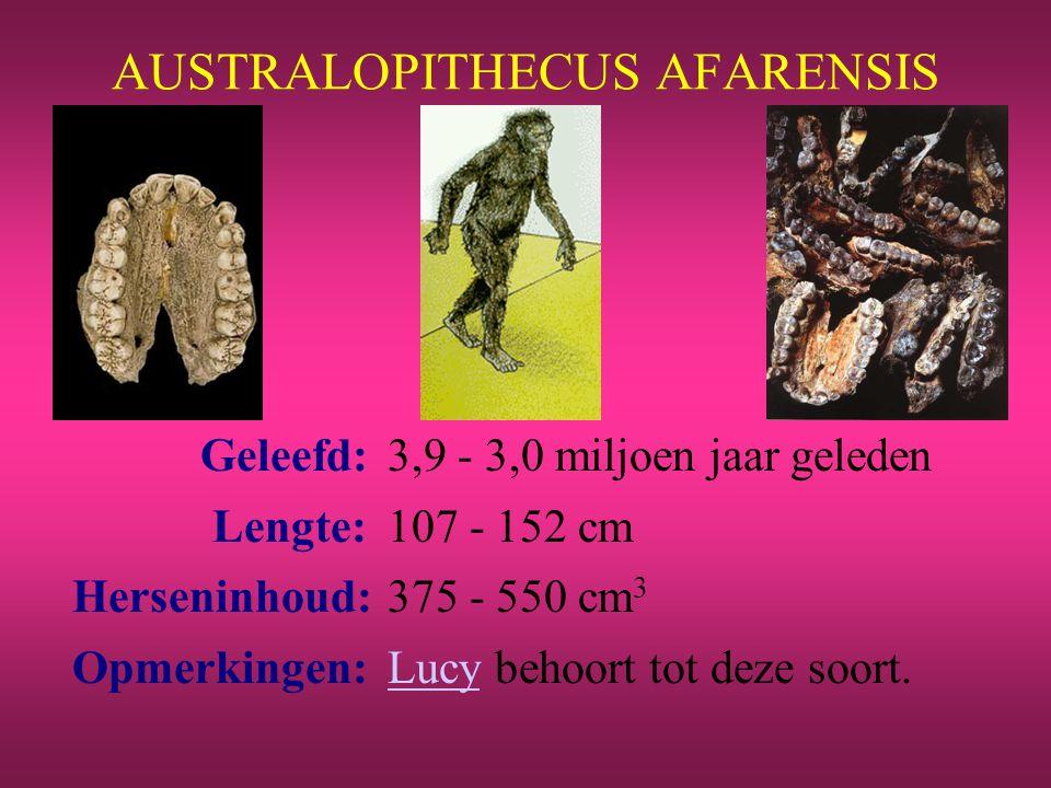Geleefd: 3,9 - 3,0 miljoen jaar geleden Lengte: 107 - 152 cm Herseninhoud:375 - 550 cm 3 Opmerkingen: Lucy behoort tot deze soort.Lucy
