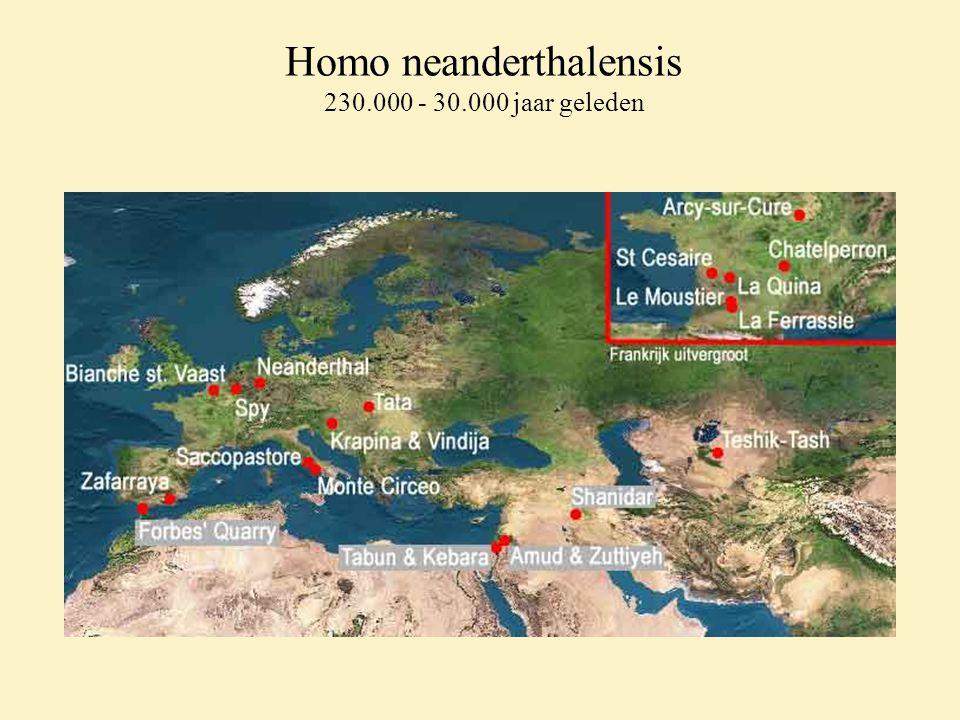 Homo neanderthalensis 230.000 - 30.000 jaar geleden