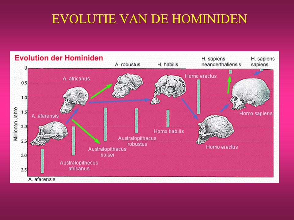 EVOLUTIE VAN DE HOMINIDEN