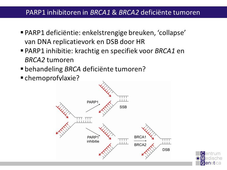 PARP1 inhibitoren in BRCA1 & BRCA2 deficiënte tumoren  PARP1 deficiëntie: enkelstrengige breuken, 'collapse' van DNA replicatievork en DSB door HR 