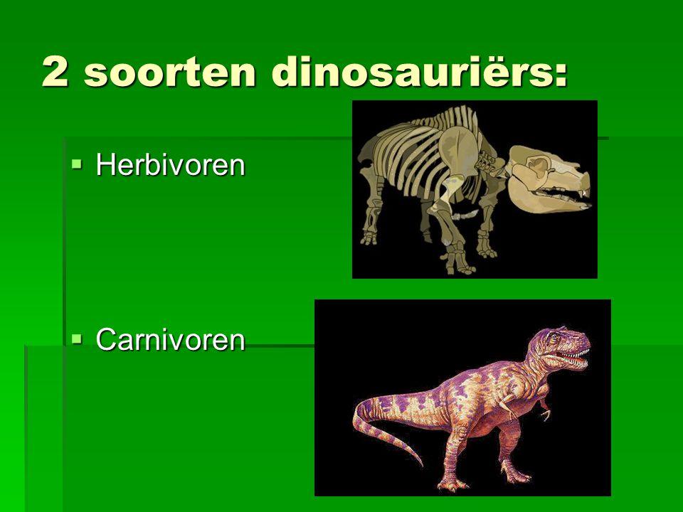 2 soorten dinosauriërs:  Herbivoren  Carnivoren