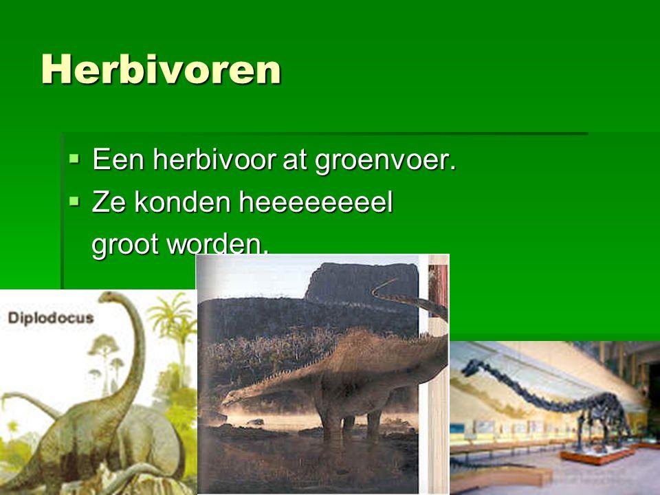 Herbivoren  Een herbivoor at groenvoer.  Ze konden heeeeeeeel groot worden. groot worden.