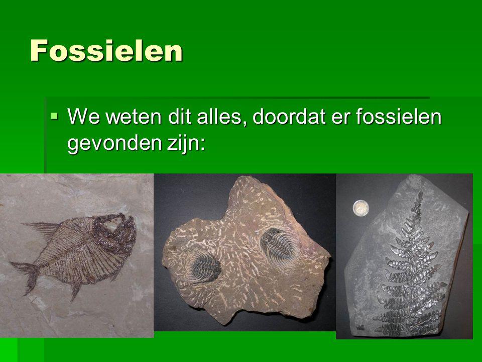Fossielen  We weten dit alles, doordat er fossielen gevonden zijn: