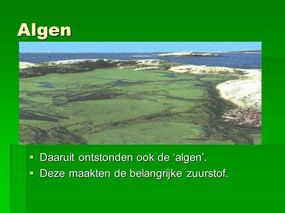 Algen  Daaruit ontstonden ook de 'algen'.  Deze maakten de belangrijke zuurstof.